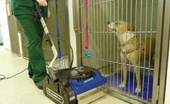 Veterinary Cleaning Solutions